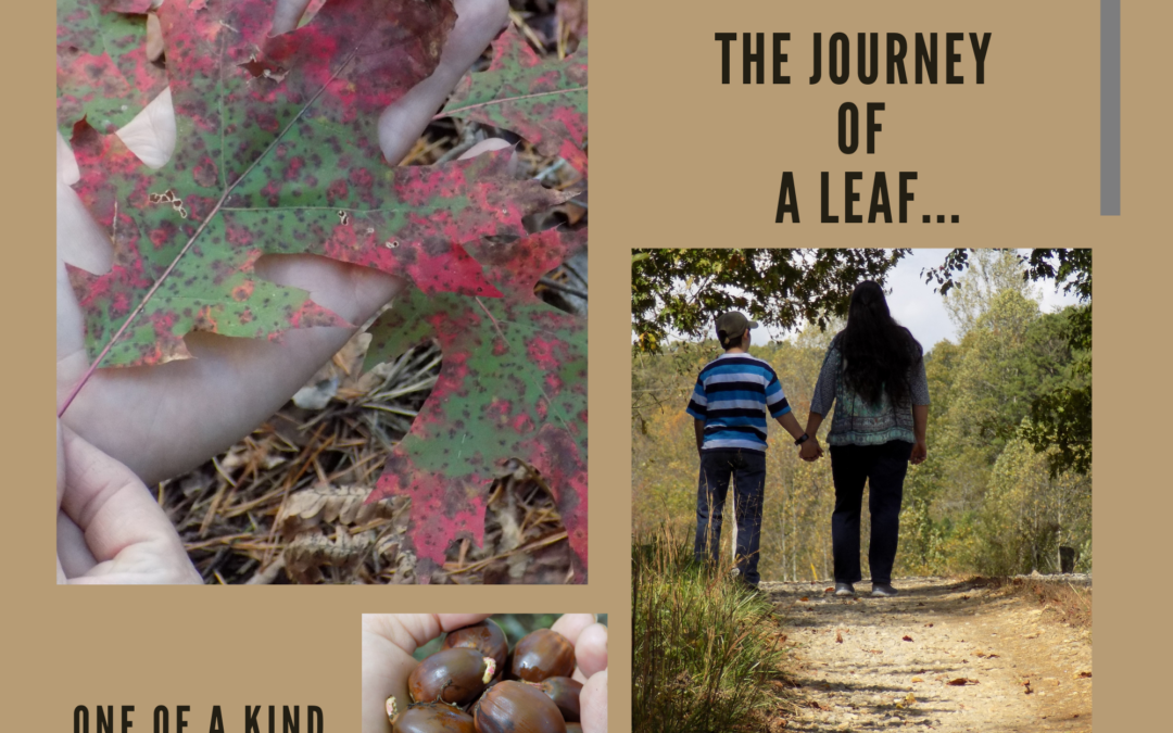 The Journey of a Leaf!!